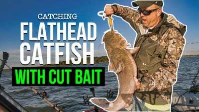 Catching Flathead Catfish On Cut Bait