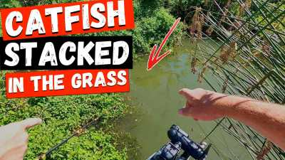 Catfish Grass