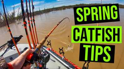 spring catfish tips