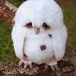 sad owl featured image