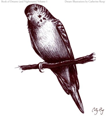 One-Legged Parakeet