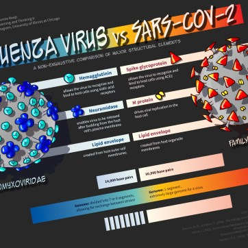 Explanatory graphic about influenza virus and SARS-CoV-2. Photoshop and InDesign.