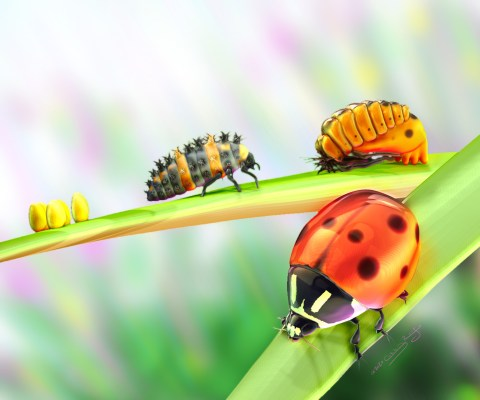 Textless version of a poster about the life cycle of ladybugs.