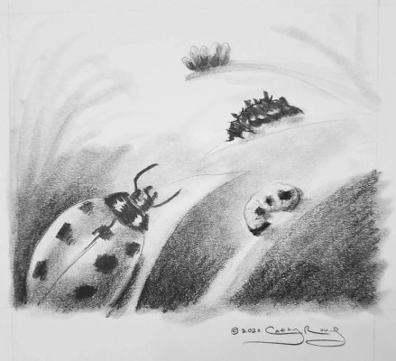 Rough sketch of a poster about the lifecycle of ladybugs.