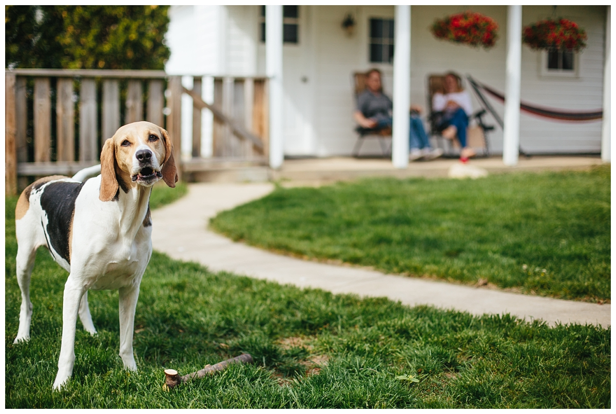 At Home Lifestyle Pictures with a Dog in Milwaukee WI