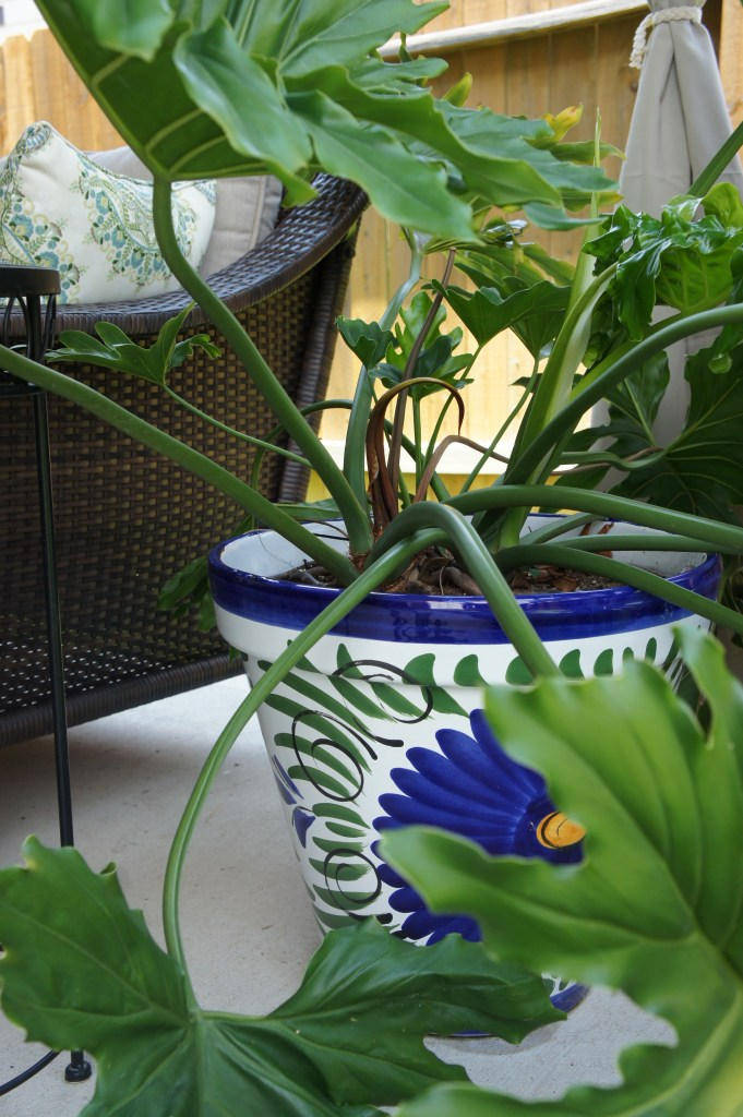 Ceramic Outdoor Pot - Outdoor Living and Patio