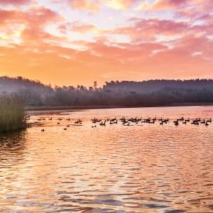 145x145mm-017_Lake Frensham_17_017