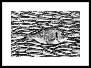 Sea Bream & Sprats frame_cropframe BW_8374-3-Tw-Tw