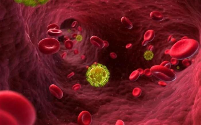 HIV virus seen in bloodstream.