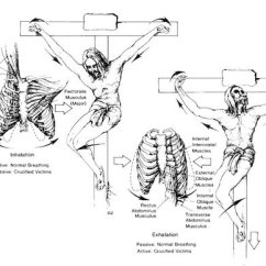 Diagram Of Human Nail Home Wiring In Hindi The Facts Crucifixion