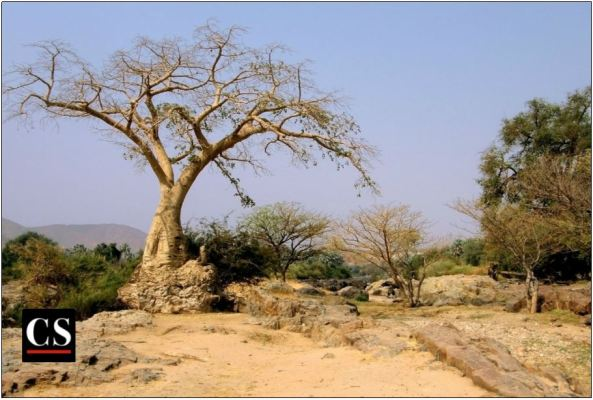 barren, soil