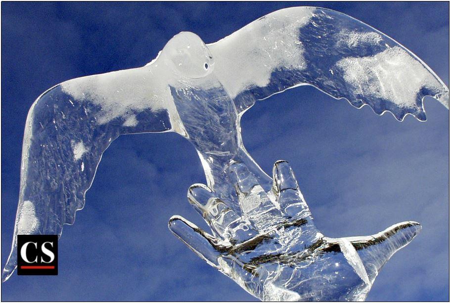 ice dove