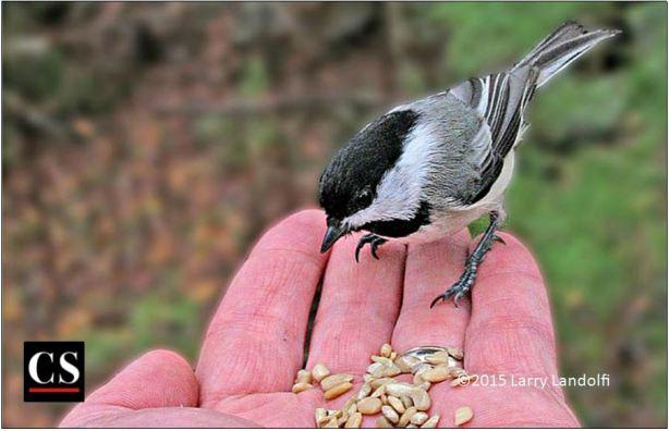 bird in the hand, bird, sparrow, food