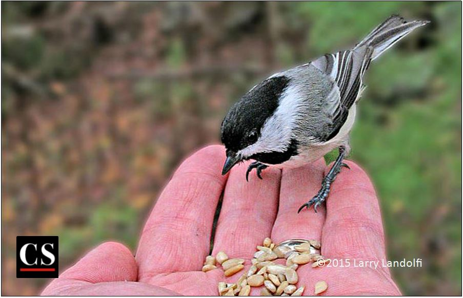 bird in the hand, bird, sparrow, food
