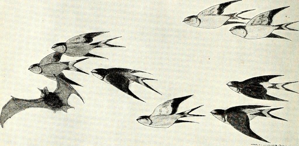 bat among birds