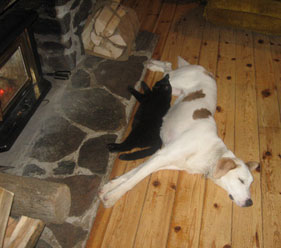 Cat Nap and Lazy Dog  Pet Outfitters near Algonquin Park
