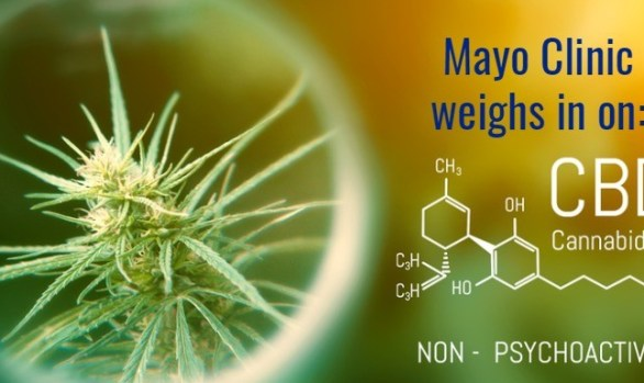 Mayo Clinic weighs in on CBD safety