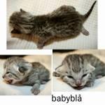 B-Kitten 1