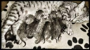 Shämsä and the kitties