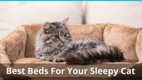 The Best Cat Beds for Kittens, Seniors, And Large & Small ...