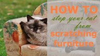 Prevent Cat From Scratching Sofa Tip For How To Stop Your ...