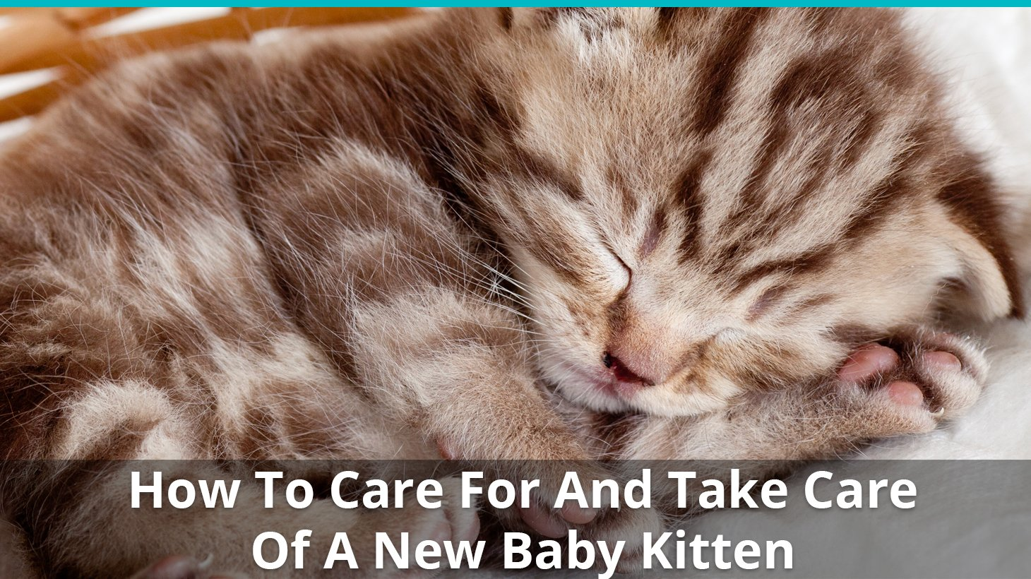 How To Care For And Take Care Of A New Baby Kitten Like An ...