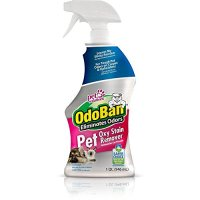 Best Carpet Stain Remover For Old Stains Diy   Review Home Co