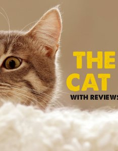 also best cat food with reviews top wet dry  freeze dried ratings rh catological