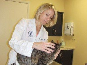 Dr. Nesbitt examining a cat