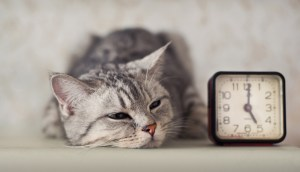 The Quirky Behavioral Characteristics Of Cats