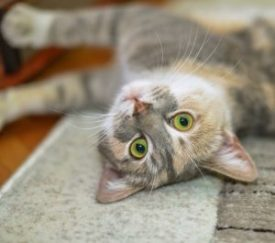 Why Does My Cat Rub Against…Everything? - Catonsville Cat Clinic
