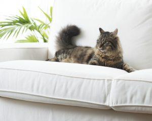 cat using body language