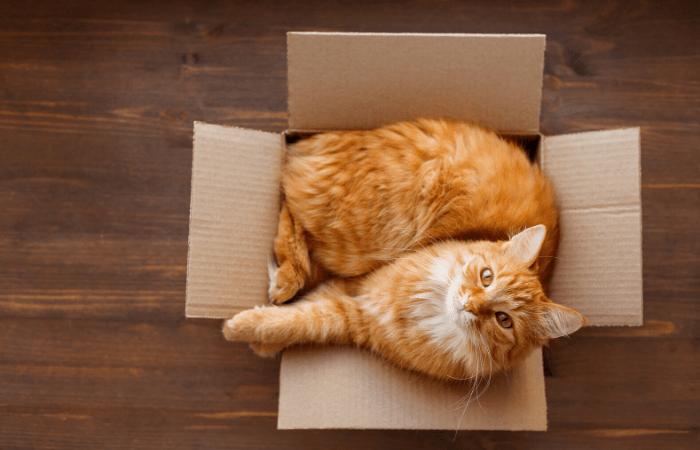 cat behaviors