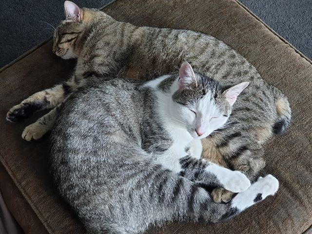 two cats cuddling together