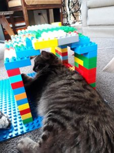 A tabby cat is lying beneath a small arch way built of lego