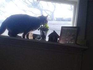 cat looking out a high window from the window sill. Sill has a photoframe, a plant and small ornaments on it