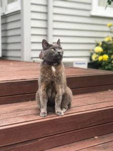 Cat sitting on a wooden step, out on a deck.  Cat is looking off into the distance, possibly sniffing the air