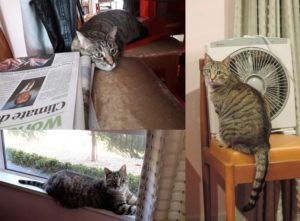 series of photos showing Noodle the cat looking happy and spoilt
