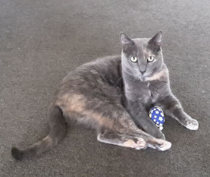 Cat laying on the ground with a toy mouse between her paws