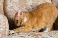How To Stop A Cat Clawing Furniture