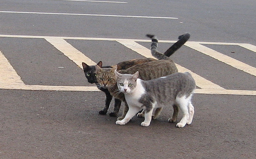 Image result for cat and road