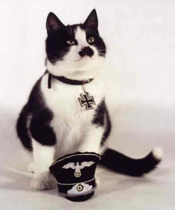 JN Hitler Cat7 Cats that Look like Hitler