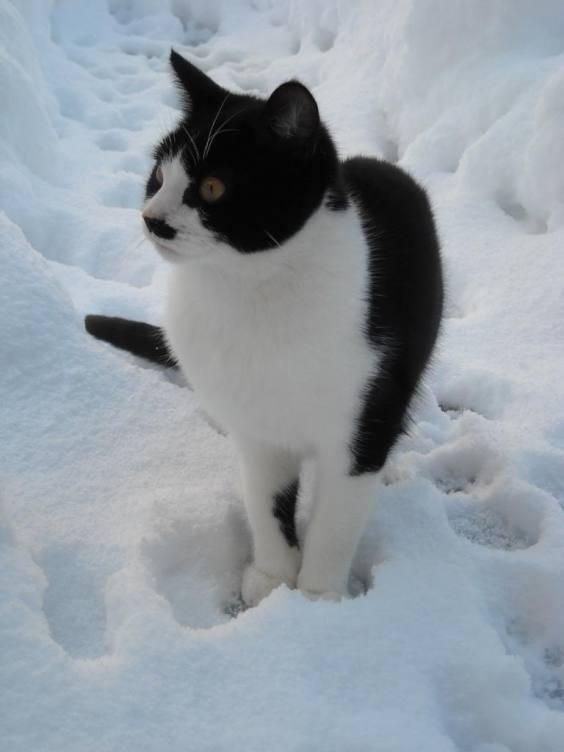 JN Hitler Cat8 Cats that Look like Hitler