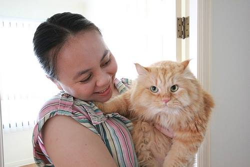 cats in care Top Tips on Cat Care For Cat Owners