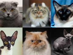 different-type-of-cats