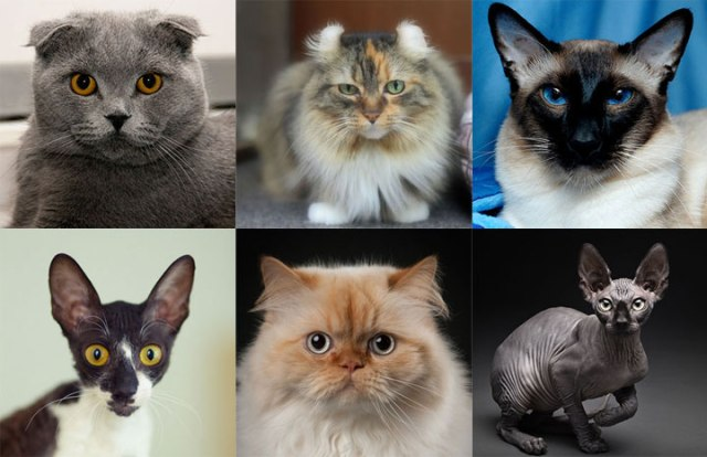 different type of cats Different Type of Cats What KIND OF CATS Are You?