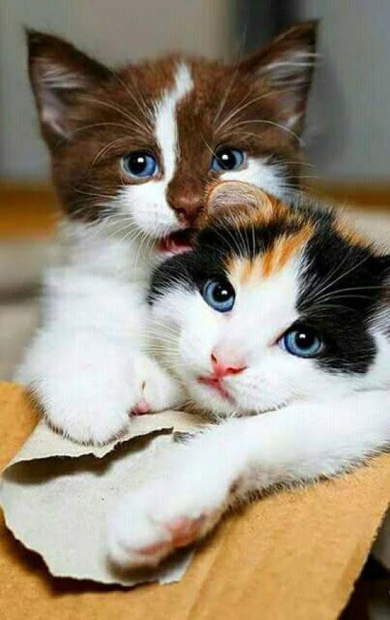 JN  Cat Essential Information about Feline Nutrition
