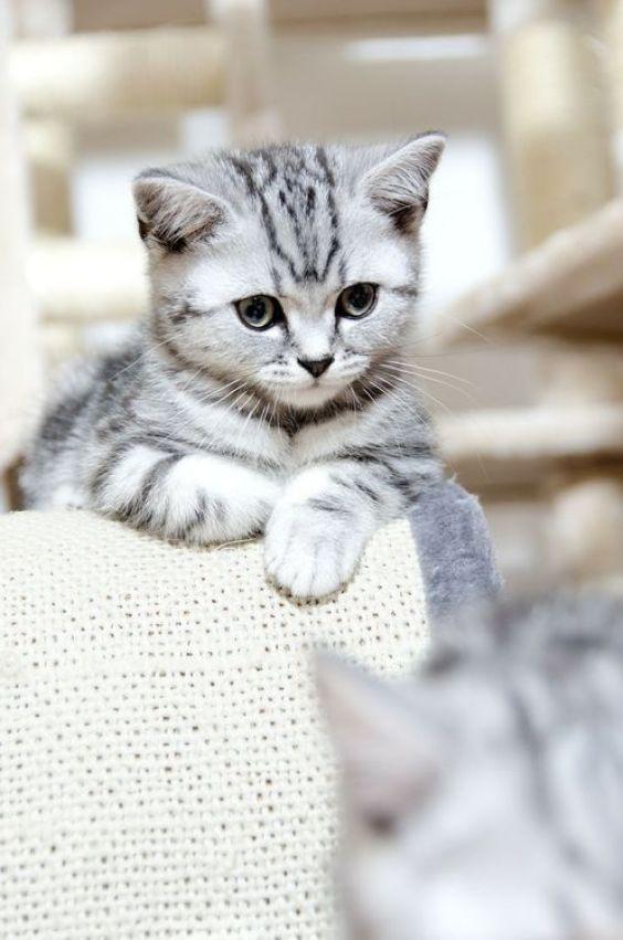 Jn Cat Food5 Essential Information about Feline Nutrition