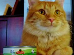 can cats eat canned tuna