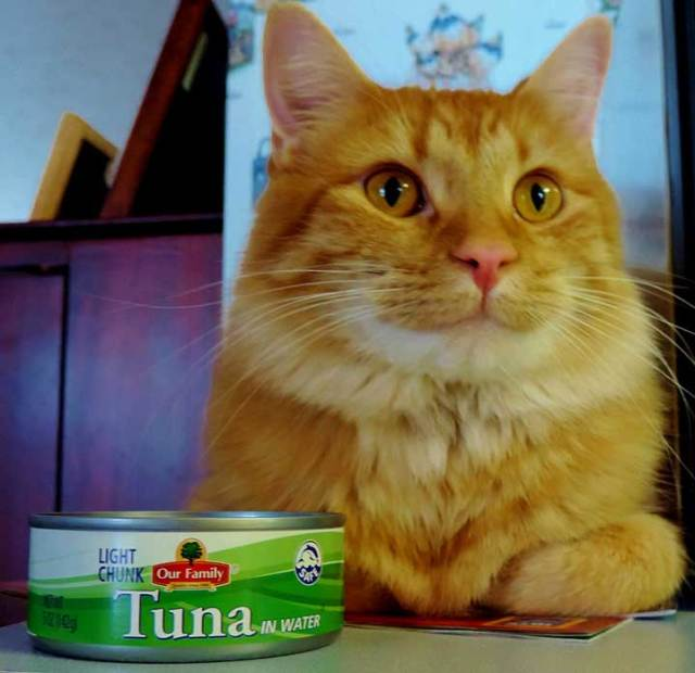 foods for cats Foods for Cats and Can Tuna Harm your Cat?